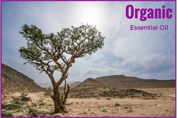 Organic Frankincense Essential Oil - Serrata